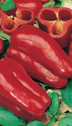 Перец сладкий Ожаровский 0.5 г